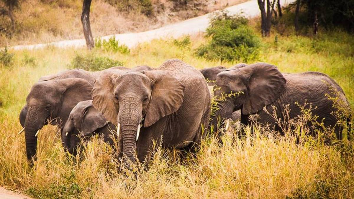 Tanzania Camping Safari -
