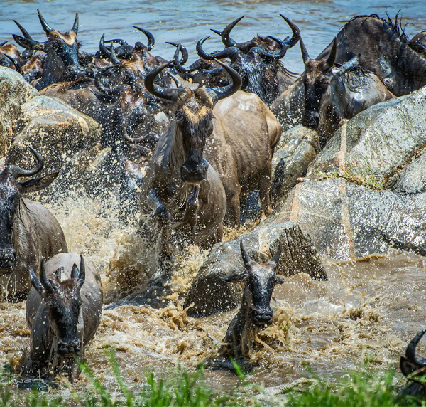 The Great Migration -